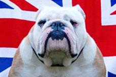 bulldog-ingles-oliver